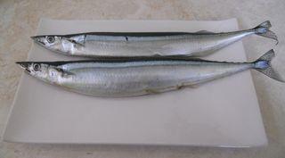 Fishraw